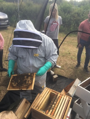 Live demonstration of a beehive and the colony